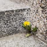 Diese Mauerblümchen bieten Chancen