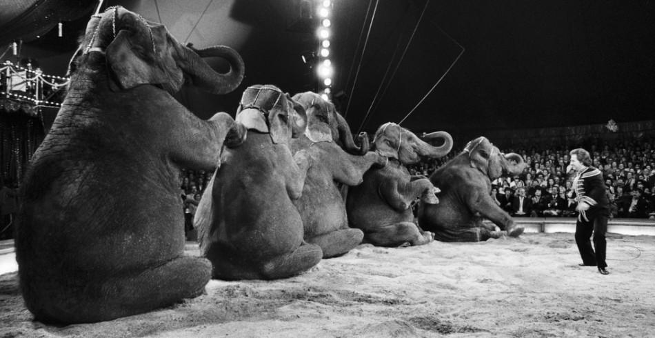 Im Sommer 2015 sind drei Elefantenweibchen gestorben. Die 53-jährige Sumatra eines natürlichen Tod