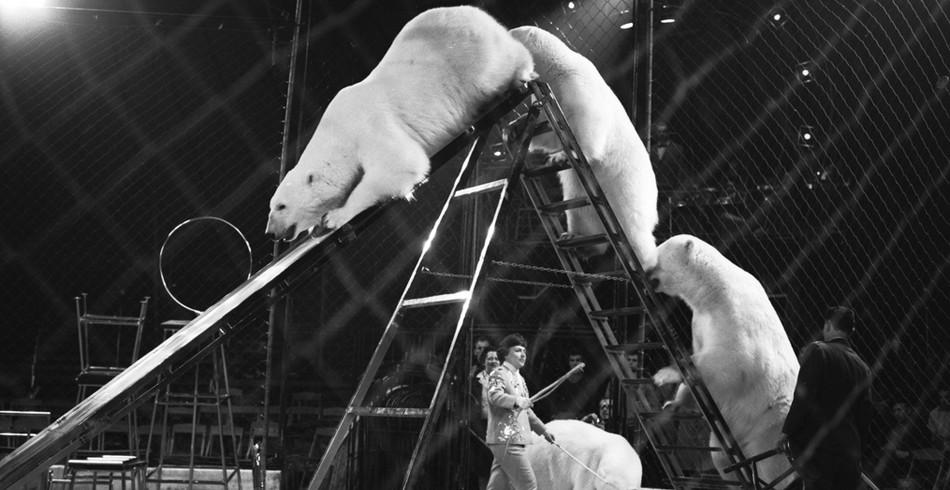 Heute unvorstellbar: Einst tanzten wie im Bild Eisbären, Affen und Nashörner durch die Manege. 19