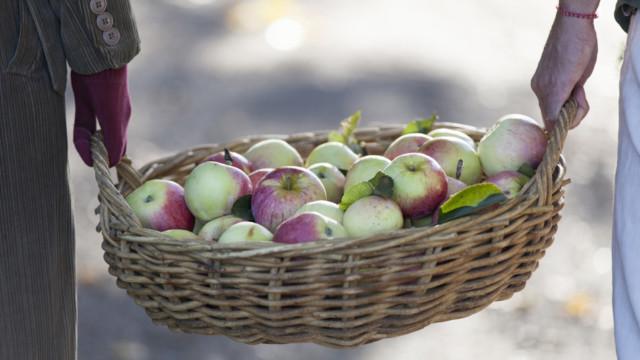 Das vergangene Jahr brachte nicht nur eine reiche Apfelernte, auch der Dividendenertrag für Aktion�