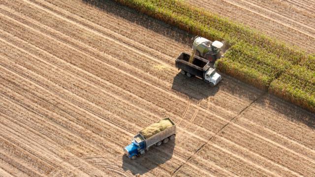 Die starken Regenfälle verschieben den Maisaussaatzyklus in den USA. Deshalb wird die Ernte dieses