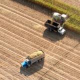 Maissaison droht ins Wasser zu fallen
